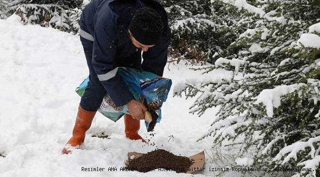 Kar yağdı sokak hayvanları aç bırakılmadı