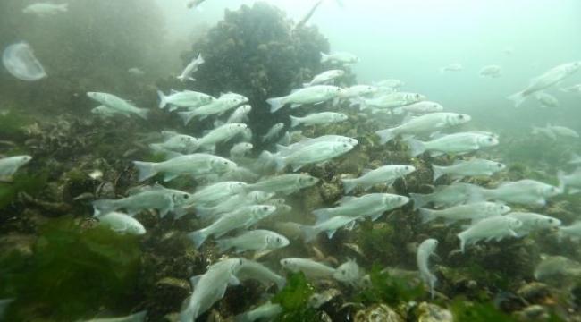 """""""İzmit'te artık 30 türde balıkçılık yapılabiliyor"""""""
