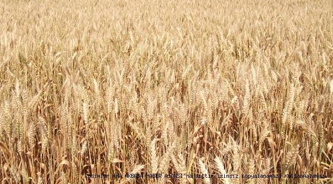 Buğday Sigortanızı Bir An Önce Yaptırın!