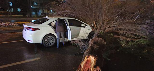 Fırtına Çınar Ağacını devirdi Araç sahibi ölümden döndü, mucize kurtuluş