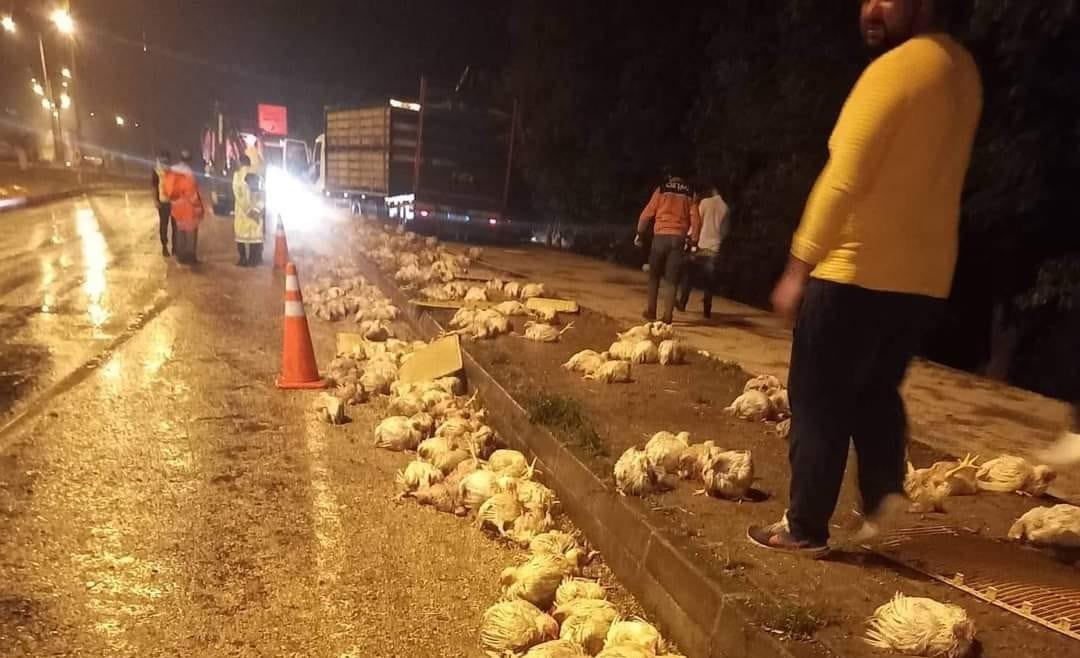 Taşkesti'de Tavuk yüklü kamyon devrildi, tavuklar telef oldu